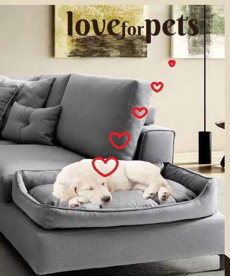 divano adatto per cani e gatti